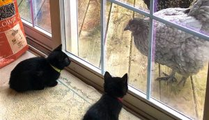 cats cat chickens