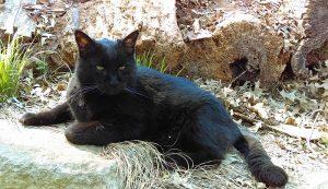memory garden cat