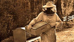 beekeeper parasites varroa mites foulbrood chalkbrood
