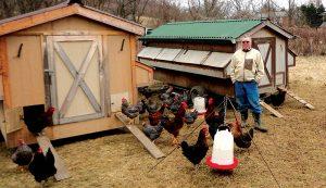 u.s. military veterans heritage chicken breeds