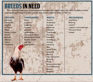 heritage breeds chicken u.s. military veterans