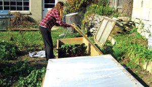 cold frames gardening