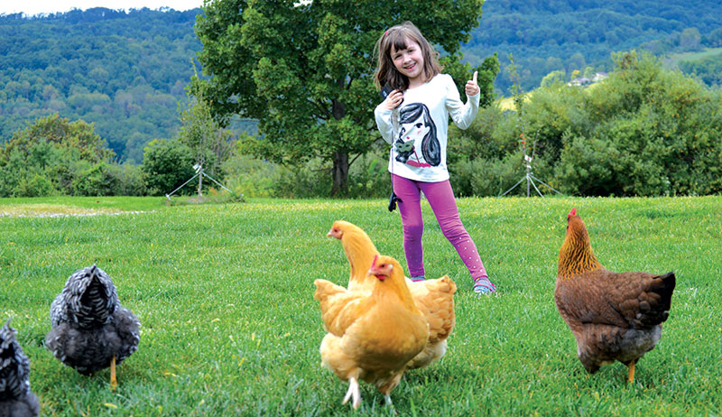 chicken chat chickens name names