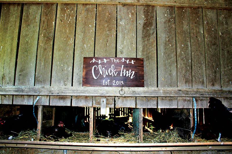 chicken photos contest coop