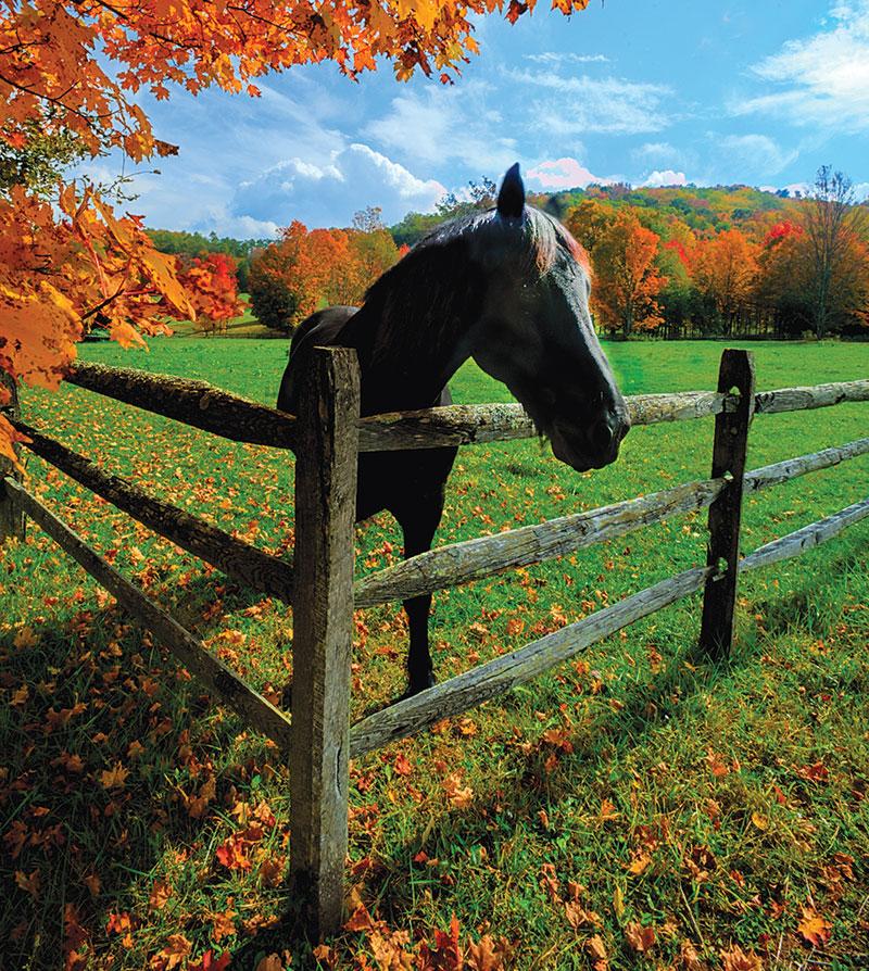 livestock fencing fences horse