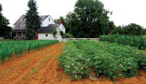 weeds weeding weed control garden crops farm