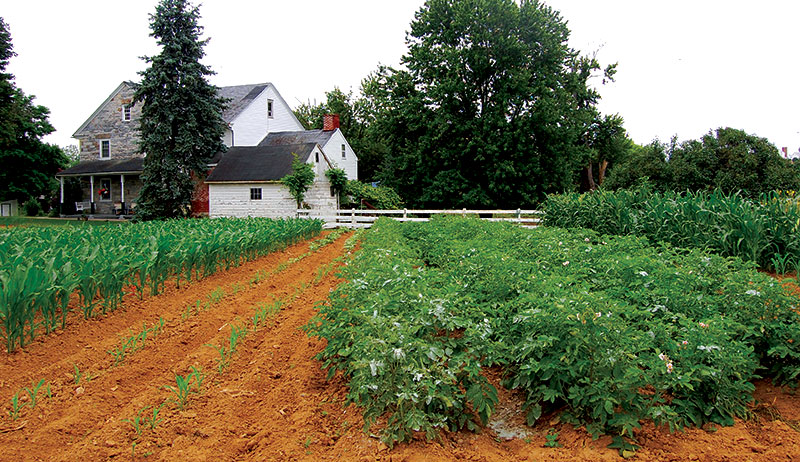 7 Methods To Control Weeds Naturally, Weed Control For Gardens