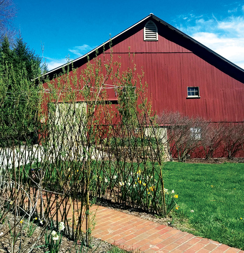 permaculture living fence willow