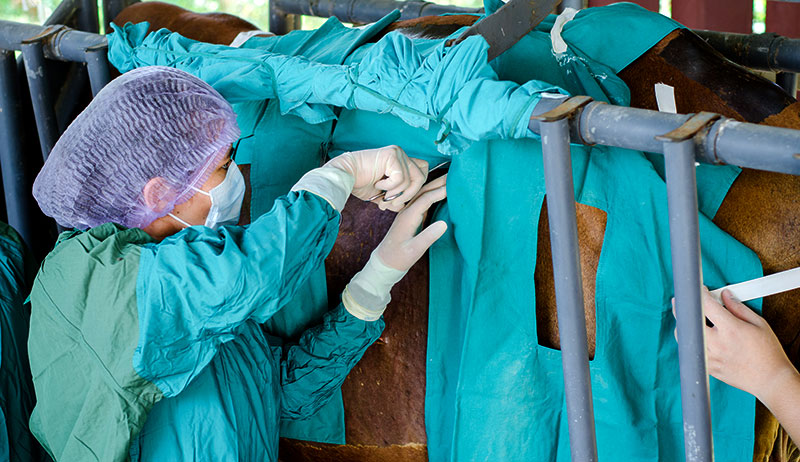 livestock surgery surgeries veterinarians farm