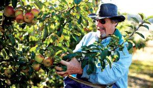 apples hard cider