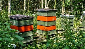 bee hives bees honeybees