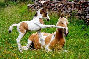 play playing animals horse mare foal mother