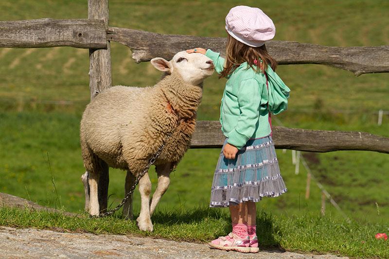 play playing animals sheep girl