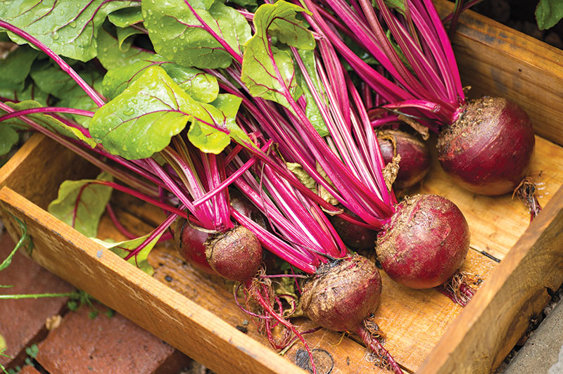 long-term storage produce beets