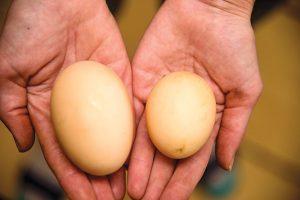 double-yolk eggs