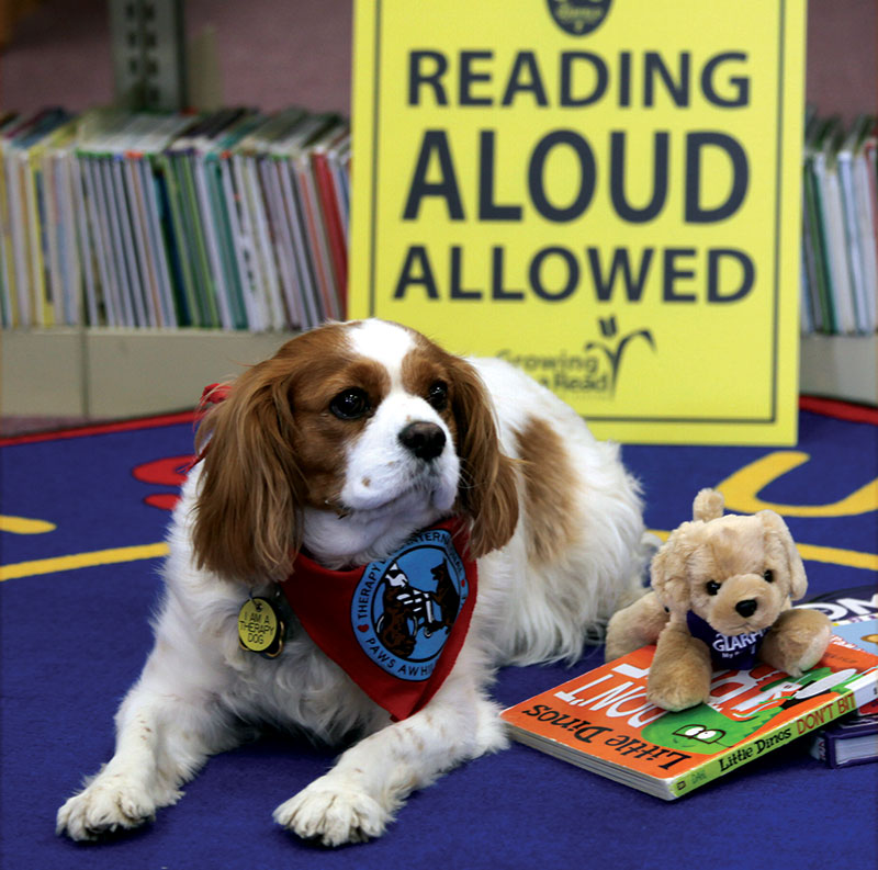 therapy animals dogs reading