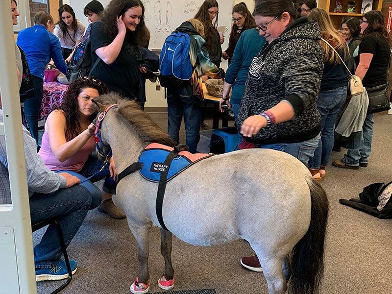 therapy animals miniature horses