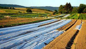 silage tarps vegetable growing