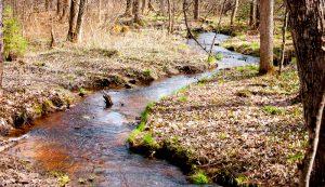 farm stream trees forest