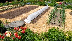 garden no till