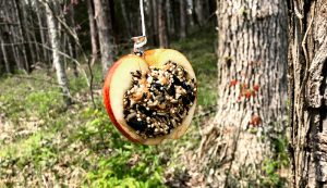bird feeder apple seed diy