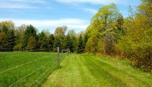 field pasture fence fencing farm