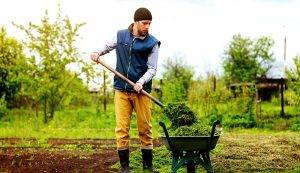 farm garden crops wheelbarrow shovel