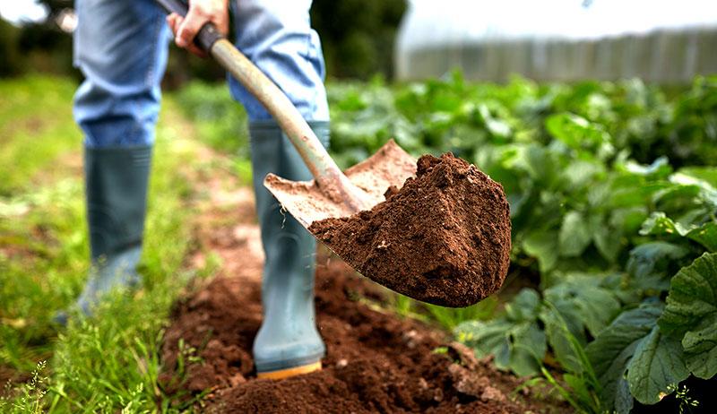 shovel dirt garden crops farm