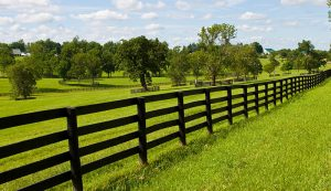 farm fencing fences livestock