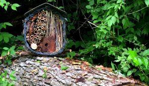 solitary pollinators native bees house apartment mason