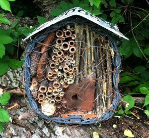 bees pollinators solitary mason