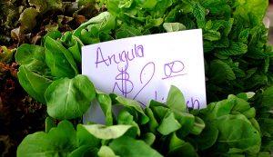 greens lettuce fresh farmers market