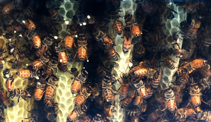 top bar hive beehive bees