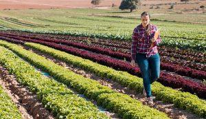 harvest vegetable farm improve