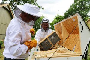 top-bar hive beehive beekeeping bees