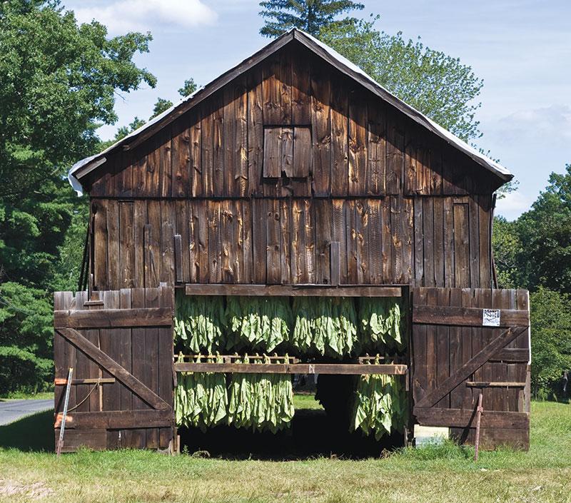 barns tobacco barn
