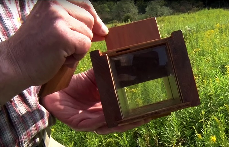 bee hunting box