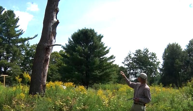 bee hunting wild hive tree