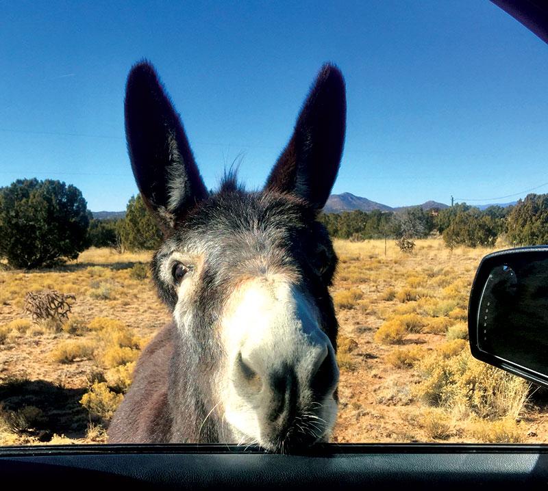 donkey photo animal photos