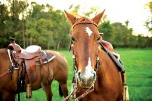horse horses photo animal photos