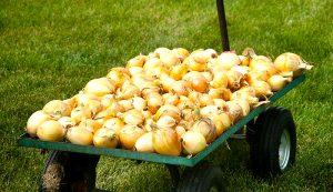 drying onions hacks yard cart