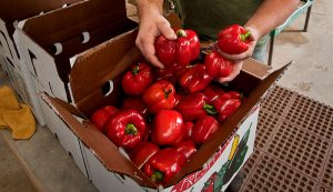 vegetables farm produce wholesale