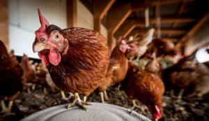 chicken coop safety storms