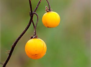 Shutterstock poisonous wild plants