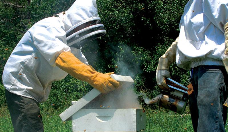 bees beekeepers beekeeping summer