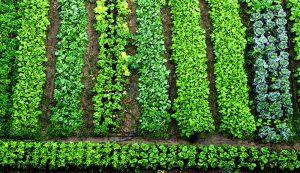 small farm farms productivity vegetable growing