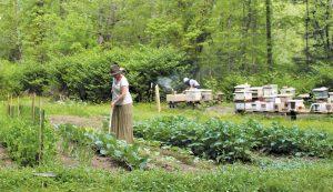 garden crops bees