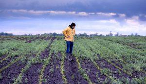 creeping grasses farm crops garden