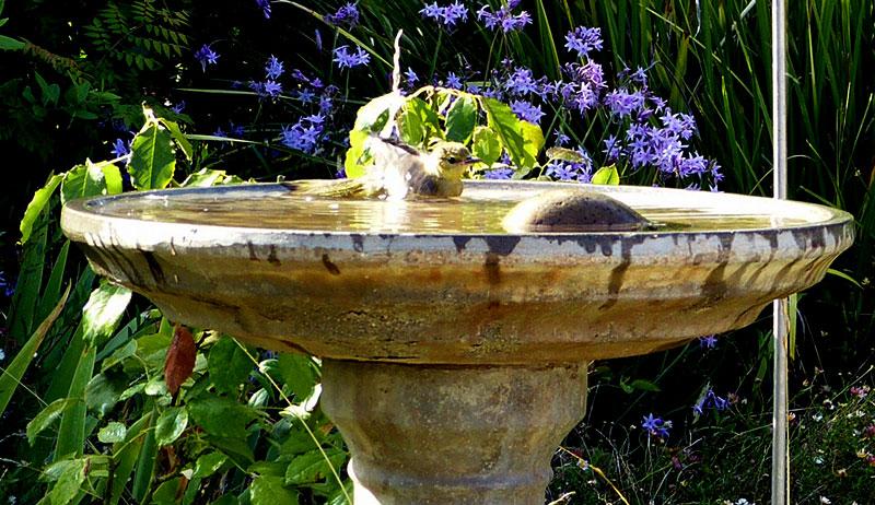 bird bath stone pollinators