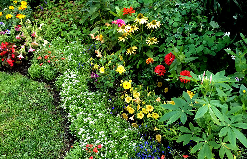pollinators flowers